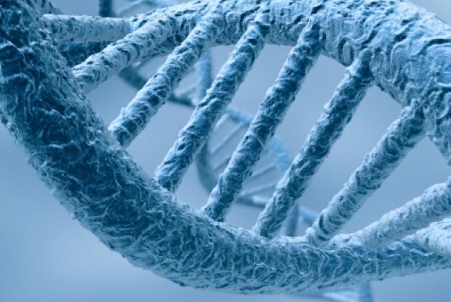 L'ADN, les cosmétiques… thérapie génique?