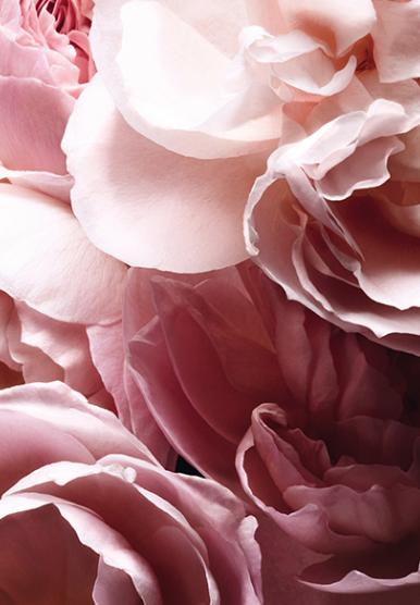 L'Extase, le nouveau parfum de Nina Ricci