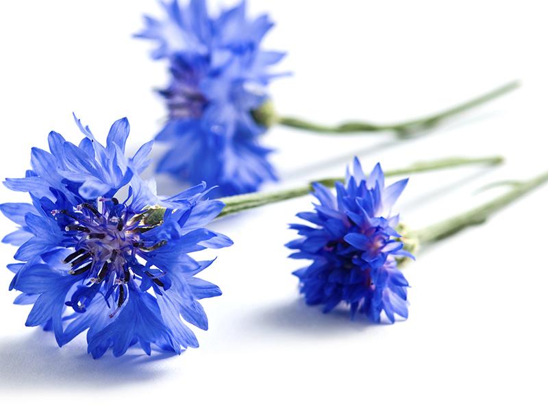 Le bleuet Klorane, l'allié de mes yeux….