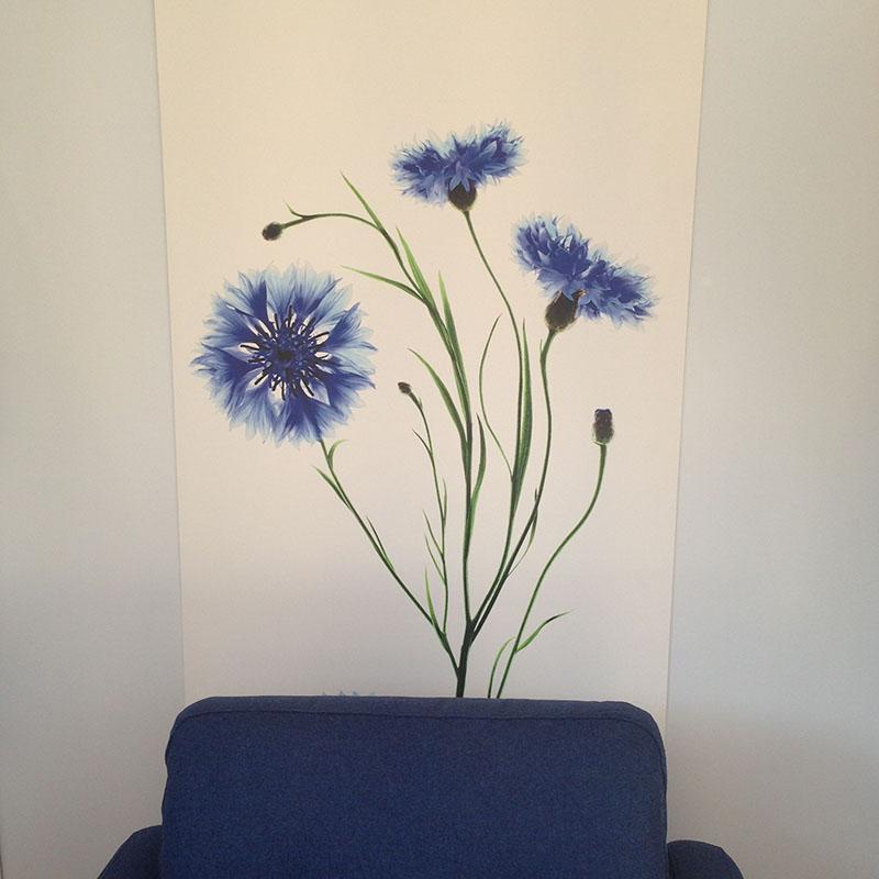 bleuets klorane