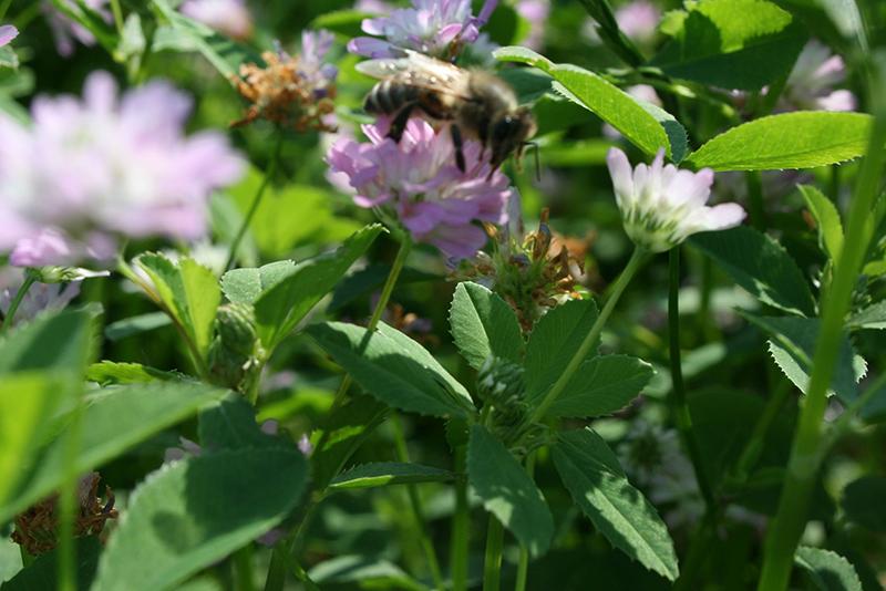 toujours les abeilles : Weleda produit même du miel (avec un apiculteur des alentours, mais uniquement pour une petite production en interne, qui n'est pas commercialisée...