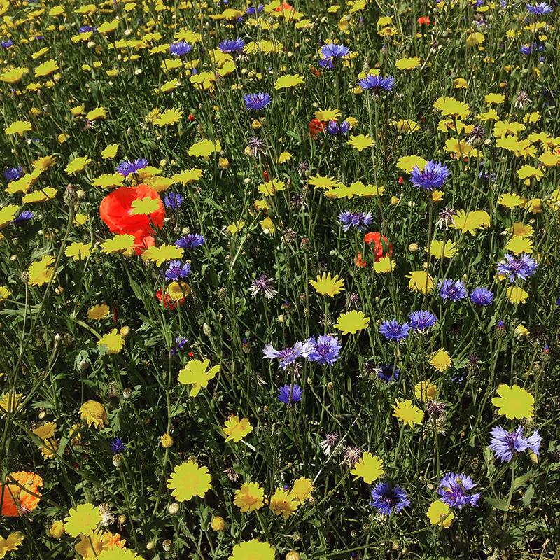 la diversité florale