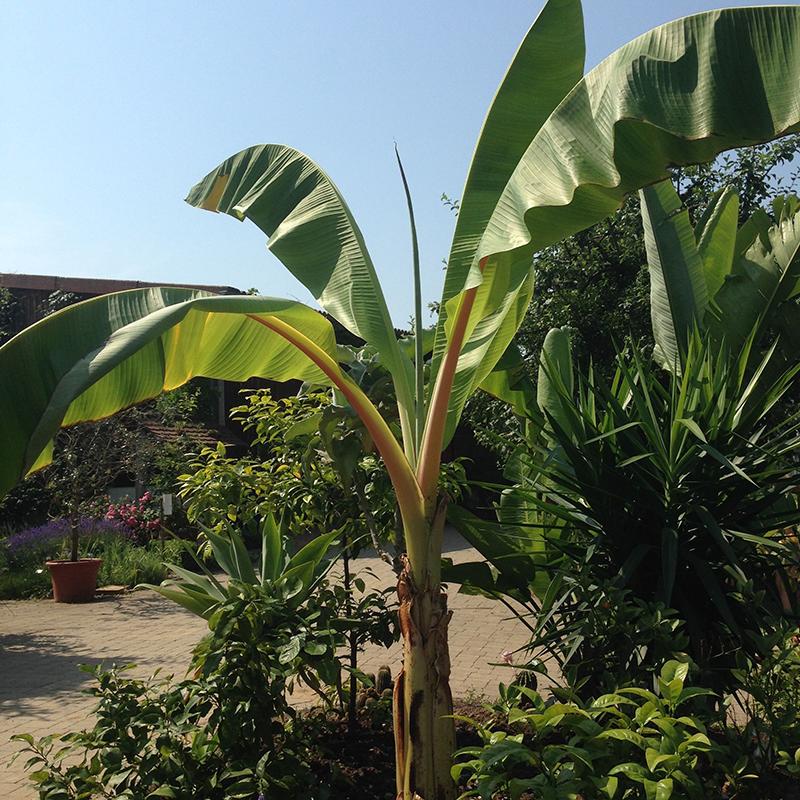 on croise même des plantes tropicales sous le climat allemand !