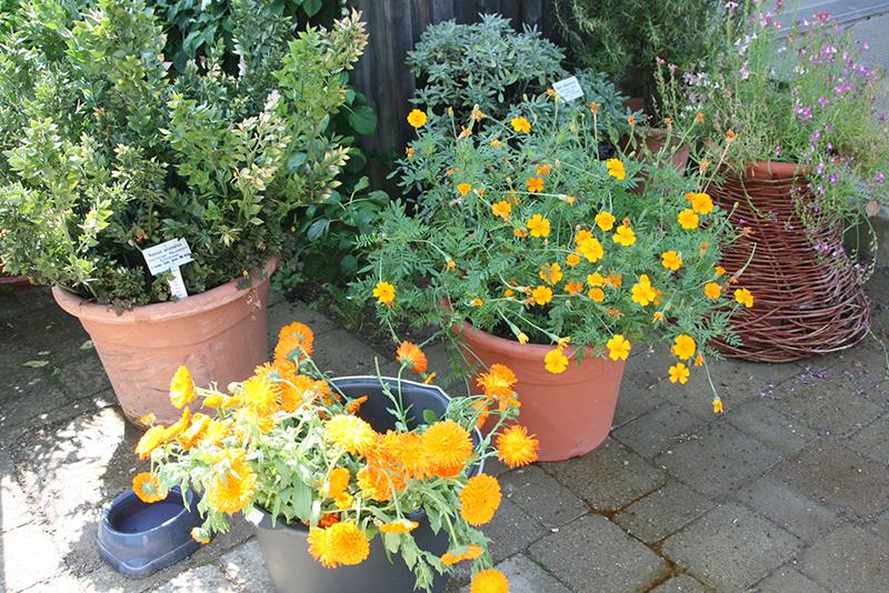 plantes chez weleda