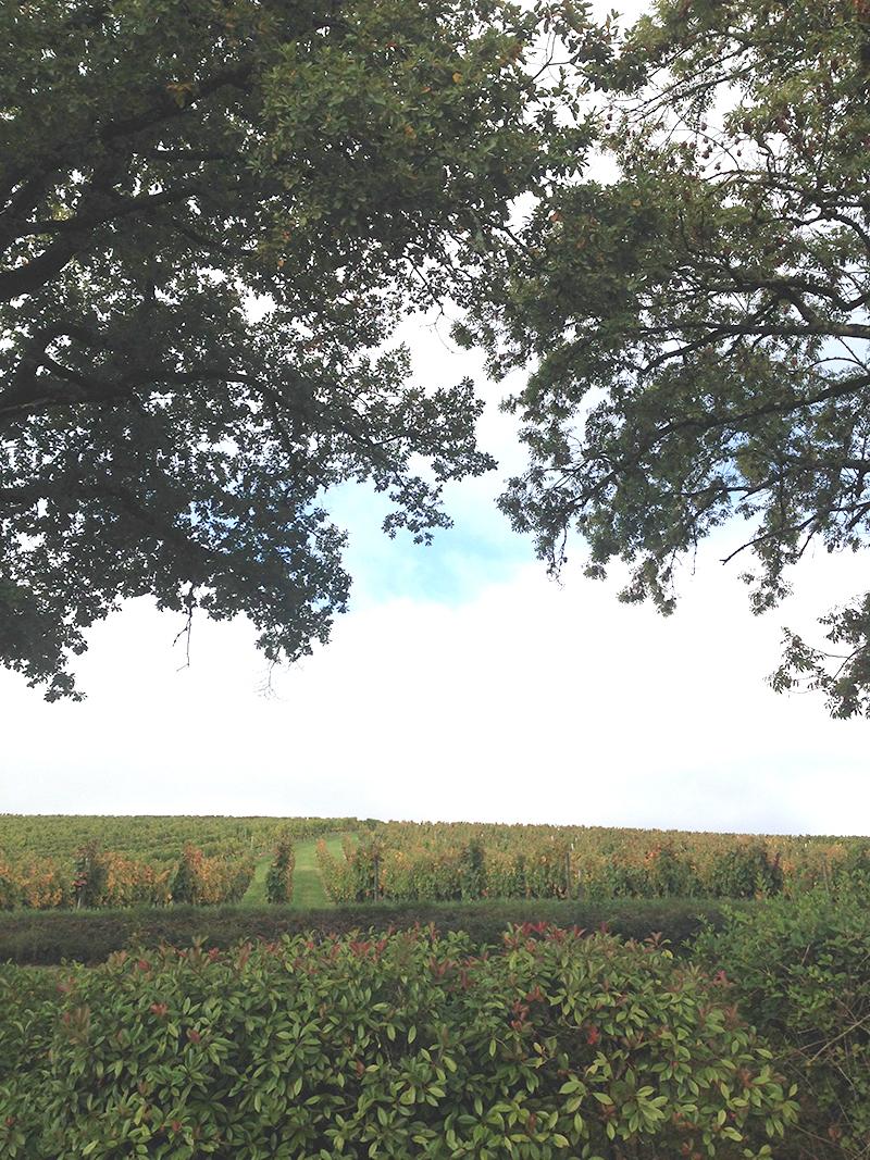 Le site de Caillac est perdu dans les vignes... vue depuis l'usine, le panorama à perte de vue !