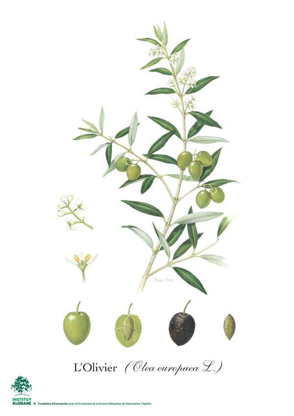 olivier klorane
