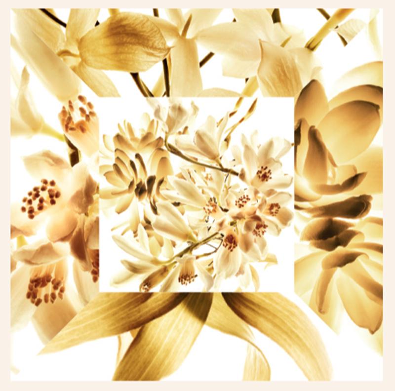 mélange fleurs Chanel pyramide olfactive Gabrielle